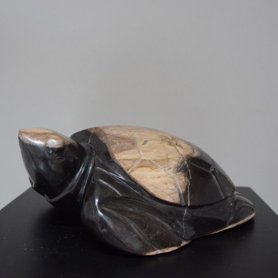 Tortue en bois fossilisé de Java